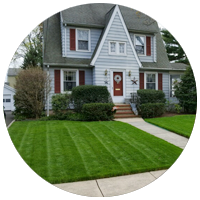 Westfield NJ yard result of our Premium Lawn Care Program