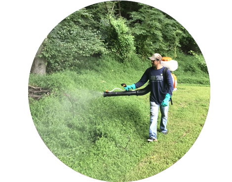 Greenstripe employee spraying organic mosquito control in a yard